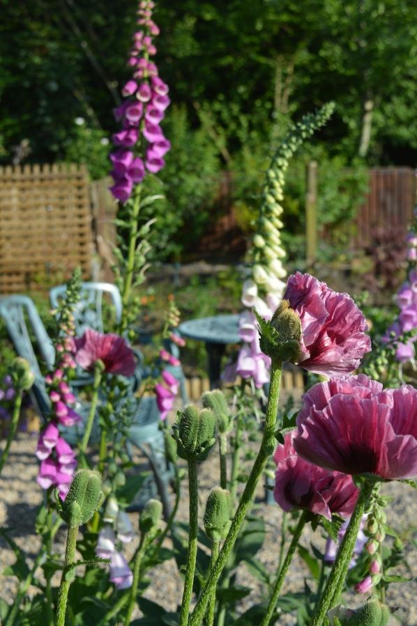 English summer garden