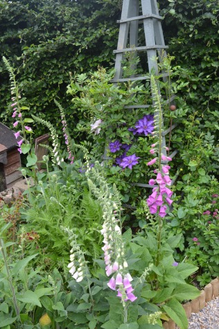 Foxgloves & Clematis
