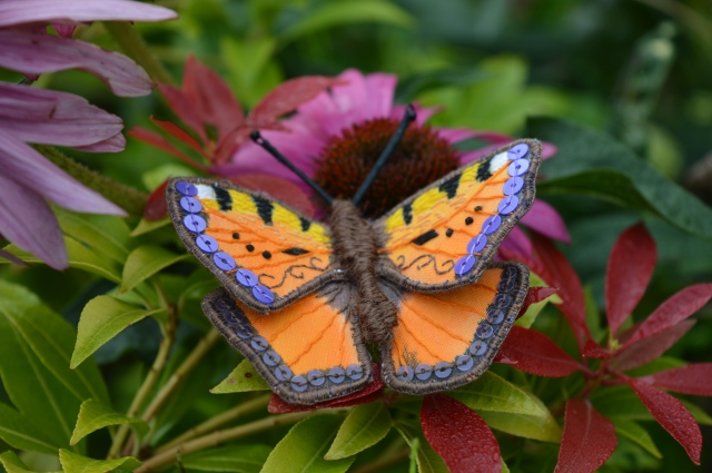 Embroidered Red Admiral