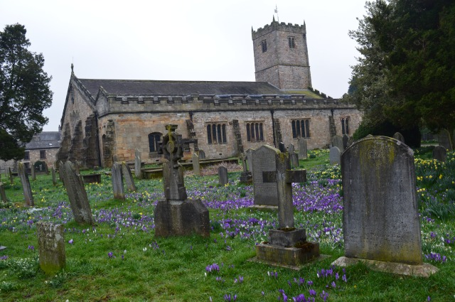crocuses at Kirby Lonsdale